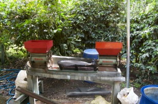 finca don benjie 6 copy